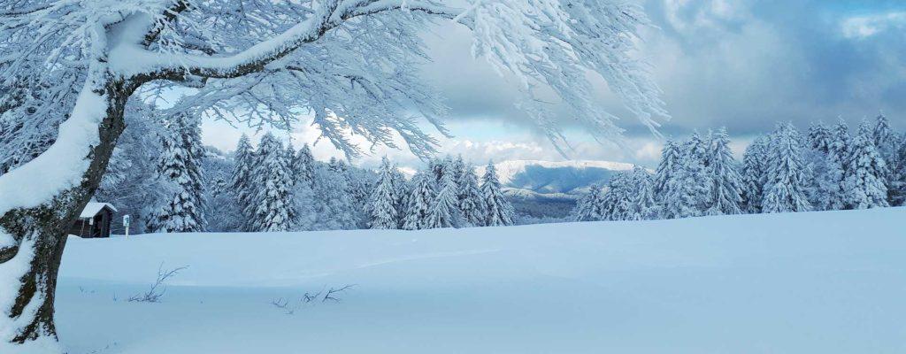 Paysage hivernal au Ballon d'Alsace